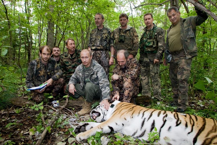 Природа, поддержка животных, программы поддержки животных, программы Путина, Путин и животные, Путин и рыба, сохранение редких видов, ирбис, леопард, белуха, тигр, белый медведь
