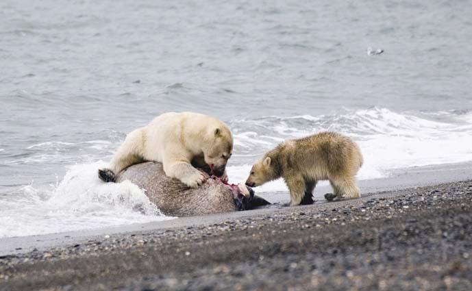 The Polar Bear Programme