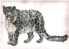 Рисунок снежного барса ирбиса
